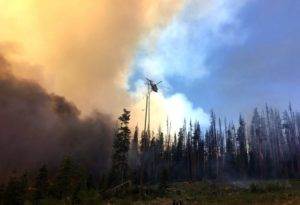 smoke from fire in air over burnt forest