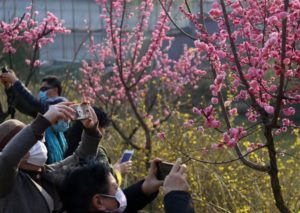 people taking pictures of blossoming flowers in china
