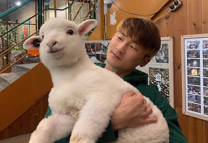 man holding sheep at cafe in south korea