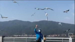 delivery man feeding gulls in china