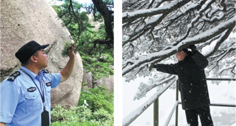 two images of tree watchman at work in china