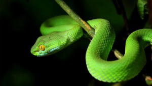 Chengyu Origin: snake on a branch