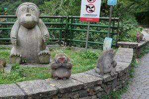 photo of fat monkey in taiwan