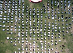 top view of mass wedding in china