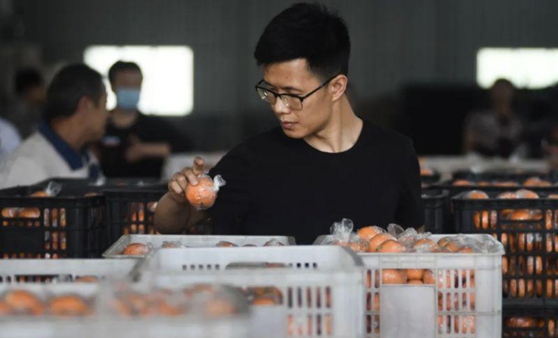 man checking oranges in china