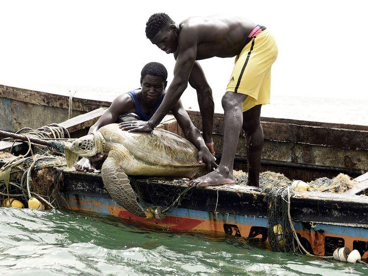 塞内加尔渔民变身海龟保护者