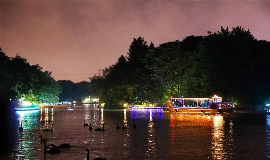 black swans on lake during night tour at shanghai wildlife park