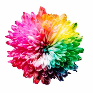 Colours: photo of rainbow flower