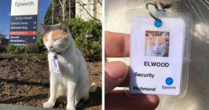 security guard cat at australian hospital