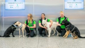 sniffer dogs at helsink airport