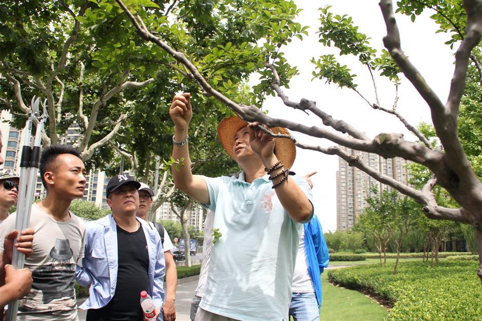 vegetation workers in shanghai