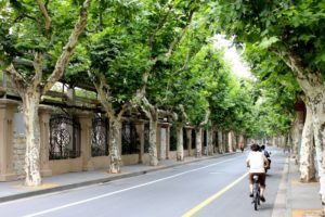 back view of cyclists on street with trees in shanghai