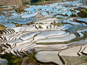 rice terraces in southwest china