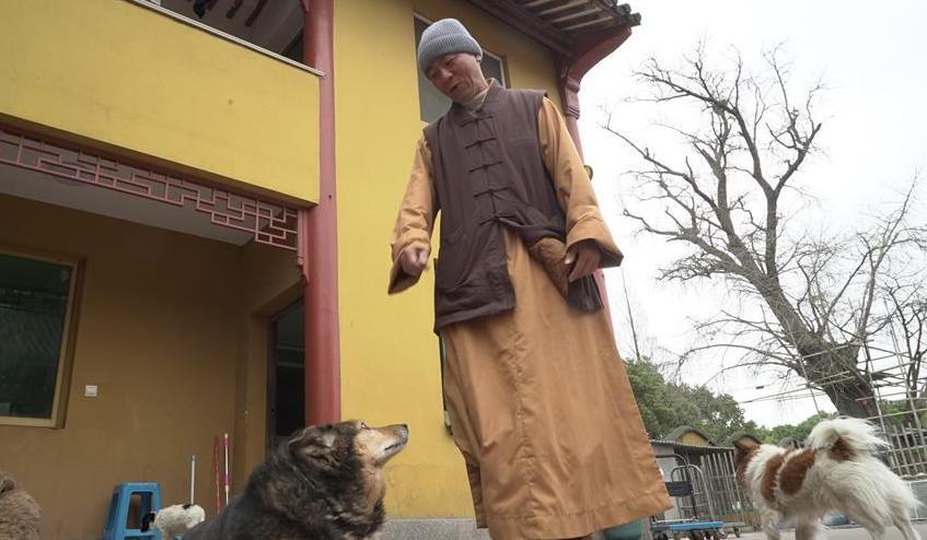 monk with dogs in china