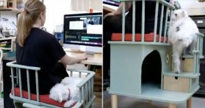 back view of home-made chair for dog and owner to sit together