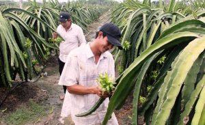 two farmers working field in vietnam