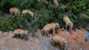 top view of elephant herd in bushes
