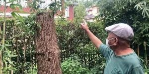 man pointing at cut down tree in shanghai