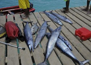 fish on dock next to sea and fishing boats