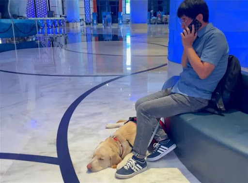 man with guide dog making a call from hotel lobby in china