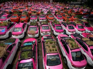 taxis in thailand with mini gardens of roofs