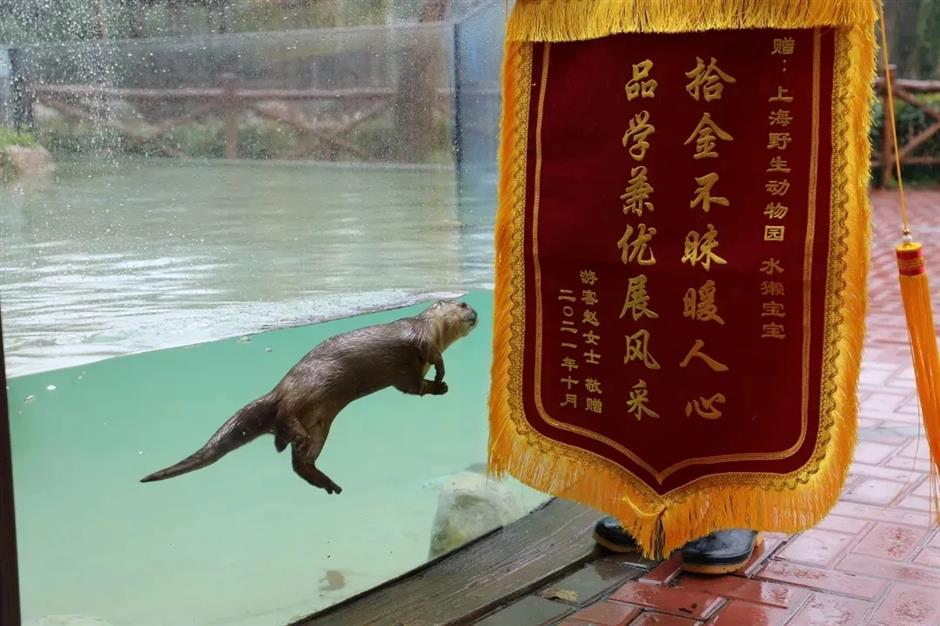 Otter Rescues Mobile Phone at Animal Park